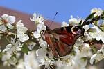 Jarní květy, hmyz i ptáci jsou vděčnými objekty k focení.