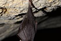 Sčítání netopýrů v jeskyni Na Turoldu, Mikulov.