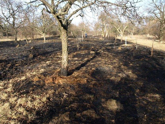 Vyškovsko brzy zase pokryjí zčernalé plochy od vypalování trávy.