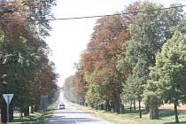 Historické aleje při cestě na Křenovice ještě před obnovou.
