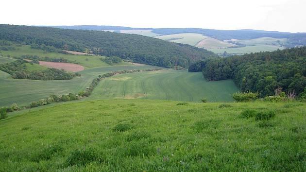 Rezervace poblíž Černčína se rozkládá nad údolím vedoucím k Nevojicím. Rostou v ní vzácné rostliny.