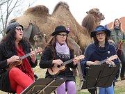 Babybanda má za sebou vystoupení na různých místech. Mimo jiné složila i píseň ke křtu velblouda Aladina ze Zooparku Vyškov. Ten ostatně pokládá za domovskou scénu. Brzy tam zahraje na vernisáži keramiků.
