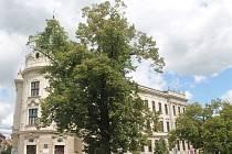 Jilm je posledním pozůstatkem parku, který byl v prostoru mezi dnešním vyškovským gymnáziem a zahradou dnes už neexistujícího Německého domu.