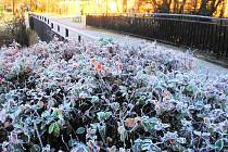 V noci mrzlo i ve Vyškově, námraza pokryla keře i stromy.