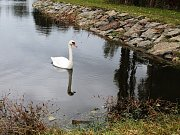 Pevnější hráz, prostor pro ptáky, ale hlavně bez tun bahna. Vyškovský rybník malý Kačenec letos prošel velkou změnou. První takovou od jeho vzniku v sedmdesátých letech minulého století. Ve středu se dočkal slavnostního otevření.