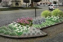 Radnice nechá v centru města vysadit trvalky.