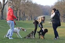 Alej zvaná K Oboře ve Slavkově je oblíbeným místem, kam Slavkované chodí se svými psi.