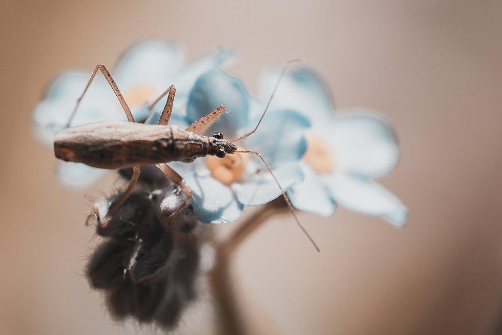 Příroda je vděčným objektem pro makrofotky.