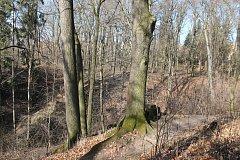 Lesoparky Kalvárie a Hradisko se rozprostírají na ploše o velikosti 12 hektarů. Nachází se v nich 6 500 stromů, 1 300 z nich je určených k pokácení.