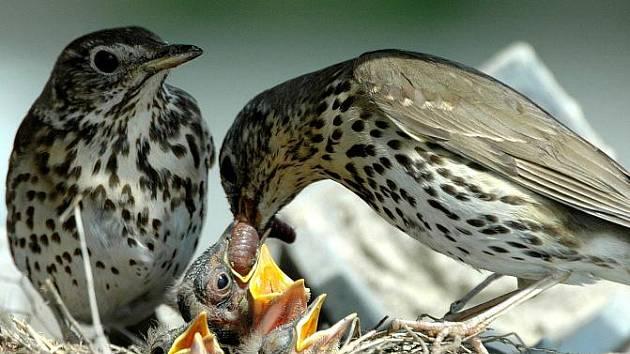 Výstava ornitologa Jiřího Bartla Příroda a ptactvo Rousínovska ve Vyškově.