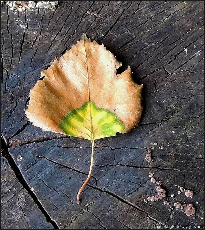 Září bylo na houby poměrně bohaté a příjemné počasí lákalo houbaře do lesů.  Kromě hub lákaly k focení i další plody lesa či květiny.