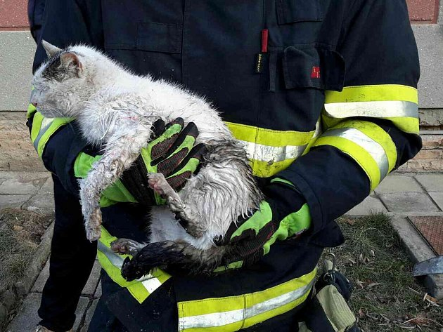 Kuriózní situaci museli řešit hasiči ve Vážanech nad Litavou. V úterý před sedmou hodinou ráno totiž obdrželi hlášení o kočce, které přimrzla tlapka kanálu. Na místo vyslali slavkovskou jednotku, které se zvíře podařilo zachránit asi za dvacet minut.