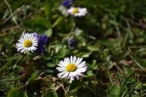 Jarní příroda se už probudila a barevné květy lákají hmyz.