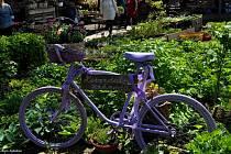 Do Levandulové zahrady Anette se zájemci podívají o Víkenduu otevřených zahrad, který připadá na 12. a 13. června.