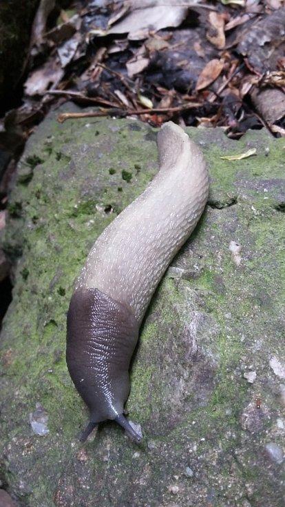 Příroda nabízí vděčné objekty k focení. Na snímku slimák.