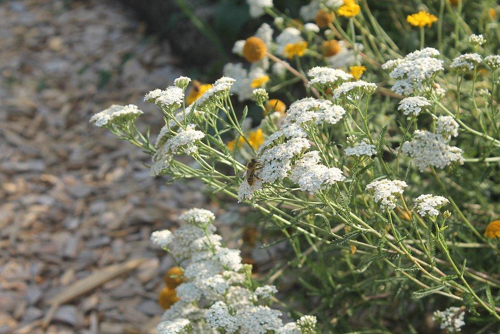 Místo pro odpočinek je také lákadlem pro hmyz a ptáky. Mírní klima v horkých letních dnech.