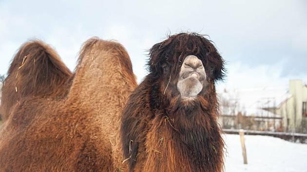 Zvířatům ve vyškovském ZooParku chybí návštěvníci.