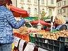 Úroda ořechů na jihu Moravy je slabá, ceny šly nahoru až o sto procent