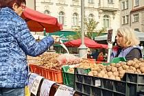 Ořechová úroda je letos na jihu Moravy slabší než loni. Škodí jim zejména vrtule ořechová.
