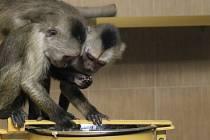 Nový přírůstek do vyškovské zoo dorazil v pondělí. Slavnostně je Zoopark představí ve středu.