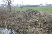 Loni pokácené topoly u rybníka Kačence ve Vyškově opět budí pozornost. Majitelka pozemku je sice nechala skácet, firma však po sobě neuklidila. To se Vyškovanům nelíbí.
