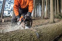 Rudolf Kubíček se věnoval těžbě dřeva. Pro usnadnění přitom využíval lanovku, kterou sám sestrojil. Kmeny pak dále zpracovával.