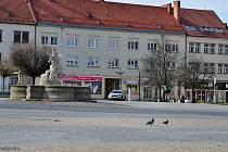 Náměstí ve Vyškově a kvetoucí stromy u gymnázia.