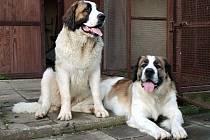 Strach ze zlodějů už rodina z Drnovic díky moskevským strážním psům nemá.