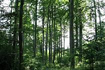 Žďánický les. Ilustrační foto.