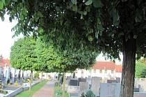 Akáty na dědickém hřbitově se ukazují jako problém. Pozůstalí musí častěji odklízet listí, které špiní náhrobky. Město problém nevidí.