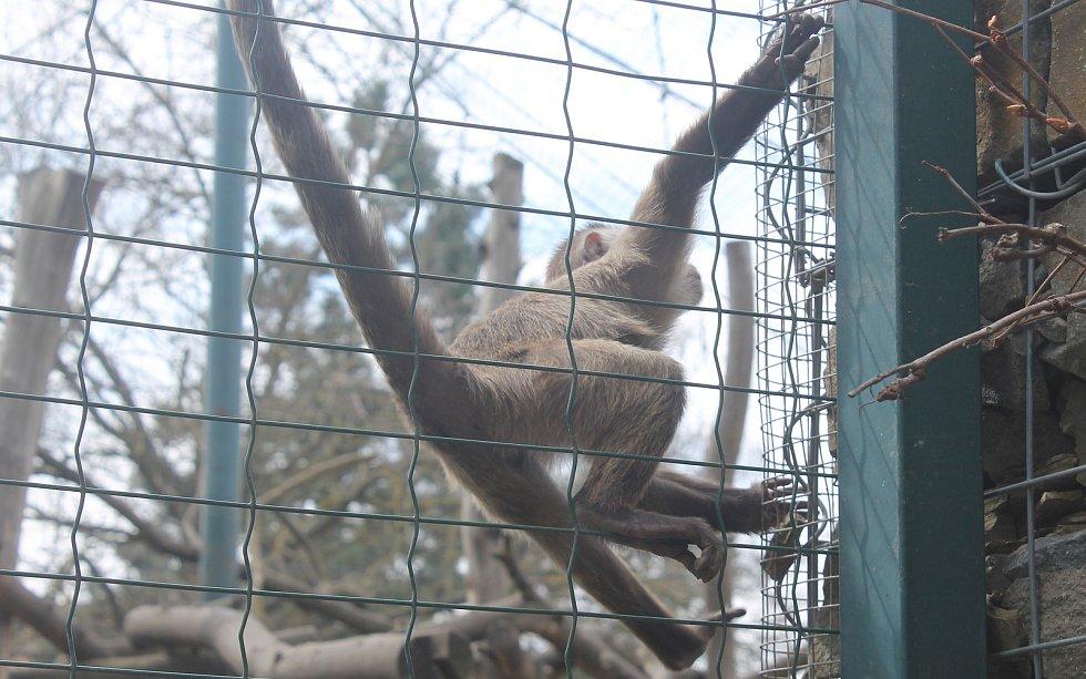 Zoopark zůstal měsíce nuceně uzavřený.