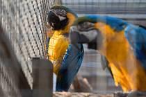 Papouščí zoo v Bošovicích na Vyškovsku, jaro 2021.