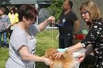 V zahradě zámku ve Slavkově u Brna se konala Krajská výstava psů.