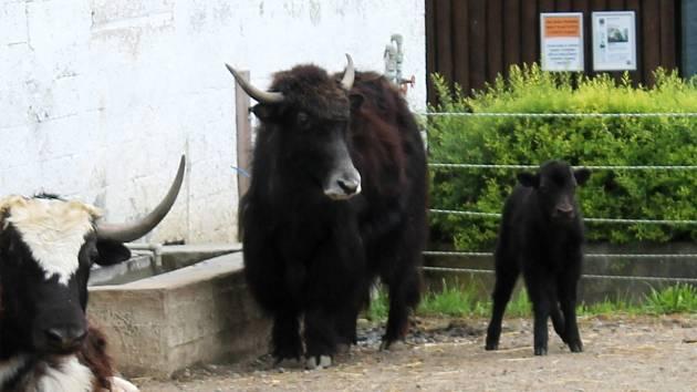 Vyškovský zoopark.