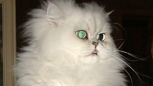 chlupatá černá kočička videa