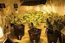 Objevená pěstírna marihuany.