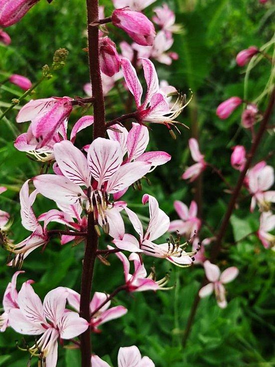 Výlet na Vyškovsko, kdy cílem byly Lysovice, Větrníky, Rostěnice a Bohdalice. Příroda je v plném květu.