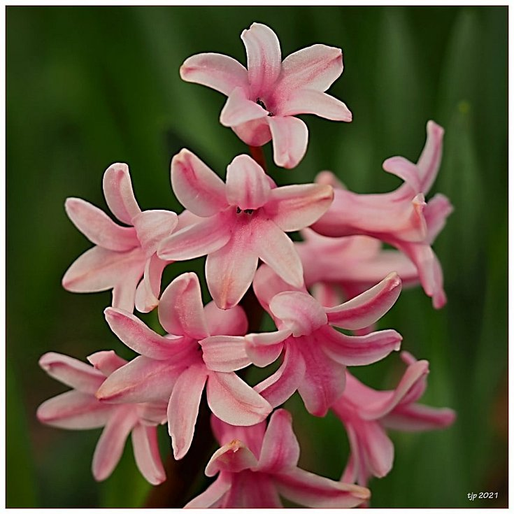 Na konci března a v dubnu začaly naplno rozkvétat jarní květiny, keře i stromy.