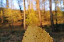 Procházka do Pístovic byla plná podzimních barev.
