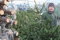 Vánoční stromek je zboží takřka neměnné hodnoty. Prodejci už několik let spokojeně opakují, že ceny zůstávají oproti loňsku stejné. Ani letošek není výjimkou.