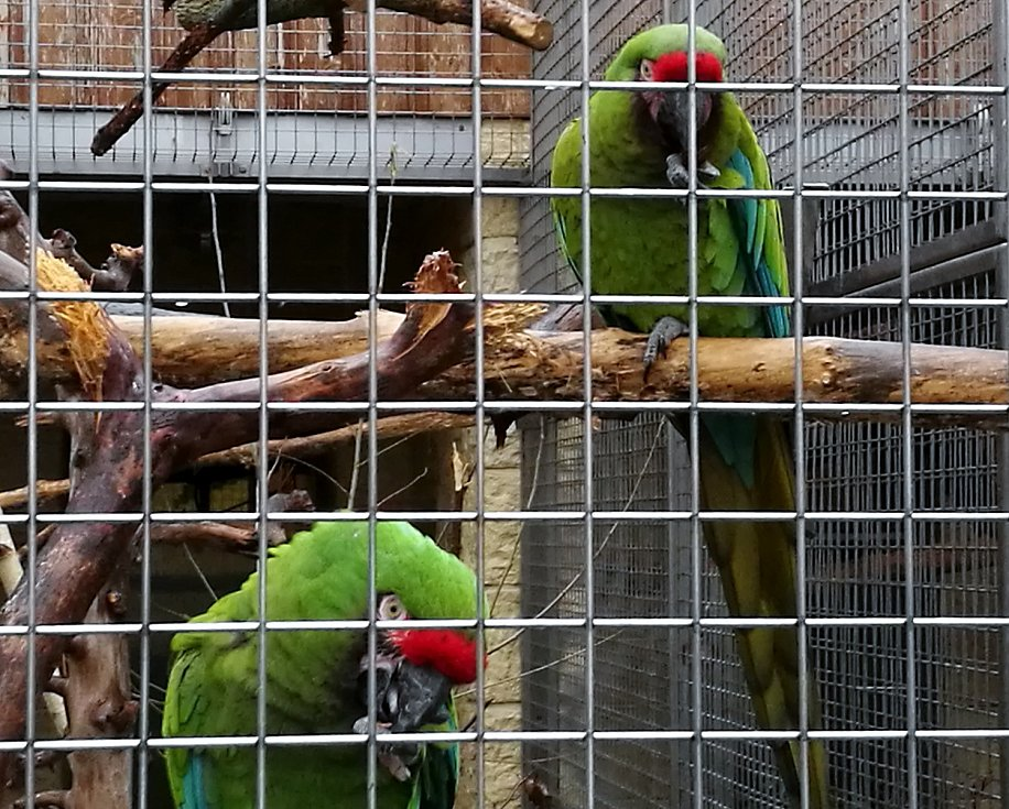 Zoo je mimořádně otevřena dvanáctého až třináctého prosince od třinácti do sedmnácti hodin.