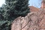 Z Palackého náměstí do konce roku zmizí veškeré zdivo, které se tam objevilo při rekonstrukci v roce 1996. Zůstane jen oblouk, který stojí přímo naproti Společenskému centru Bonaparte.