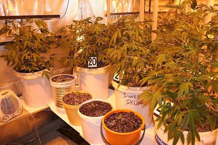 Čtyřiačtyřicetiletý muž z Lovčiček ve svém bytě pěstoval marihuanu.