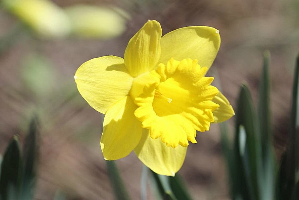 Jarní květy, hmyz i ptáci jsou vděčným objektem k focení.
