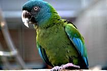 Bošovickou papouščí zahradu je možné navštívit od 1. března až do 17. listopadu: denně včetně víkendů a státních svátků od 10 do 17 hodin, od dubna je pak otevírací doba o hodinu prodloužená. V zahradě letos rozšířili chov arů horských.