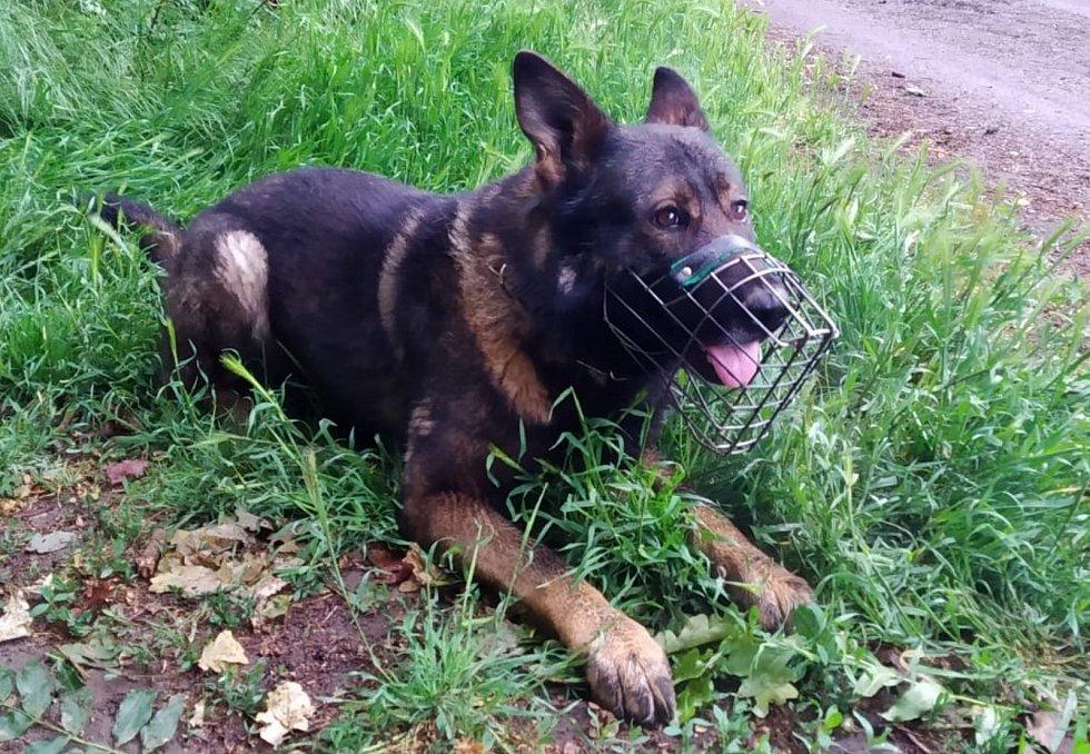 S nalezením pohřešovaného penzisty pomohl policejní pes Ajax.