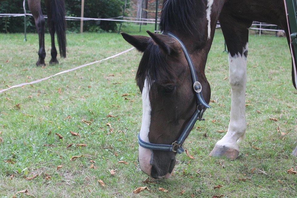 Pro koně byl celý den náročný. Sice pršelo, ale teplota je unavovala.