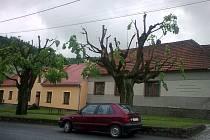 Lidé z Račic jsou nespokojeni s prořezávkou stromů. Netvoří žádnou korunu.