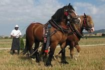 V Hodějicích se předvedli oráči s koňskými spřeženími.