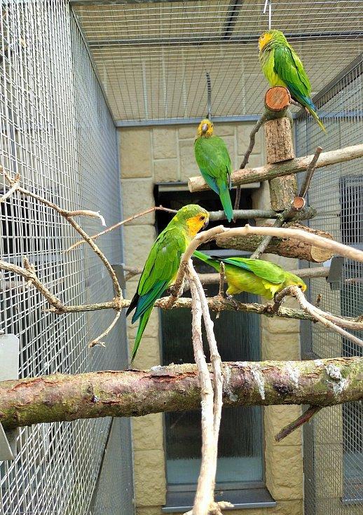 V papouščí zoo nyní provozují stovku expozic.